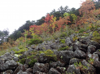 shikaribetsu-nature-forest-8.JPG